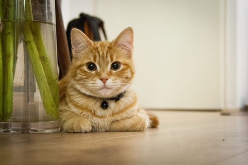 young-cat-718785_1920.jpg